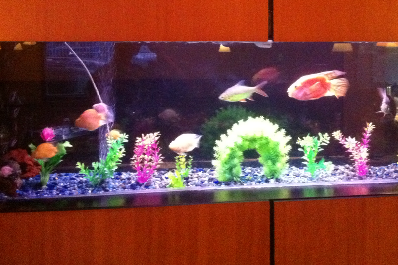Fresh Water Fish Tank
